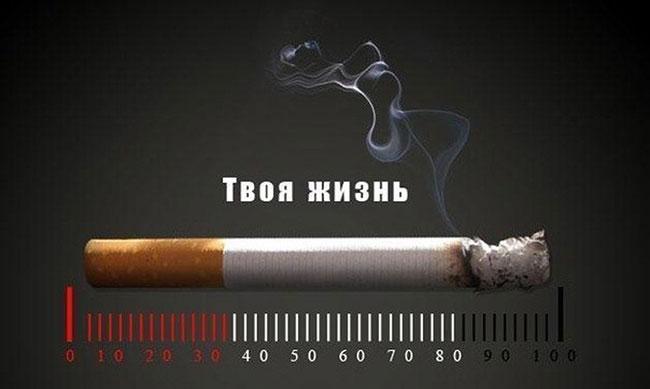 реклама табачных изделий может размещаться